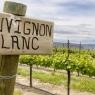 Venerdì 7 maggio 2021 si festeggia la 12ª Giornata internazionale del Sauvignon Blanc.
